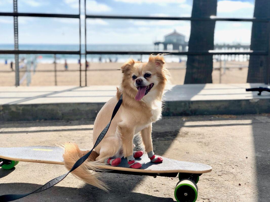 Beastie on a Skateboard
